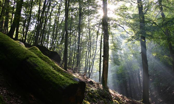 Das Grüne Wunder Unser Wald