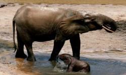 ct_mythos kongo_1_elephant_02